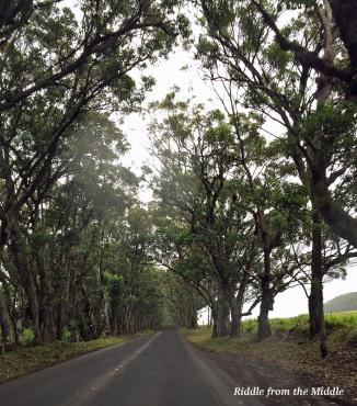 Tree Tunnel Road in Kauai, Hawaii