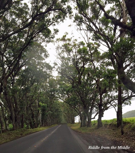 Tree Tunnel Road in Kauai, Hawaii