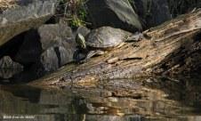 turtle (lake)