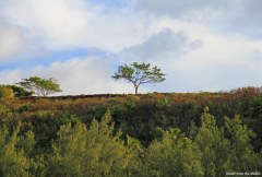 tree on hill