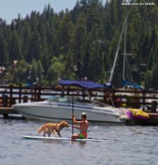 dog on paddleboard