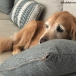lazing on couch