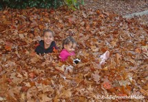 young t+s in leaves