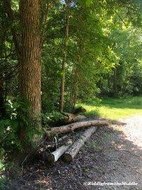 cabin walk1