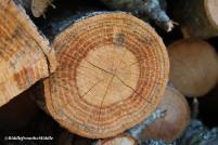 wood pile macro