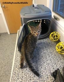 vet visit itsaboy
