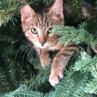 Christmas tree perch